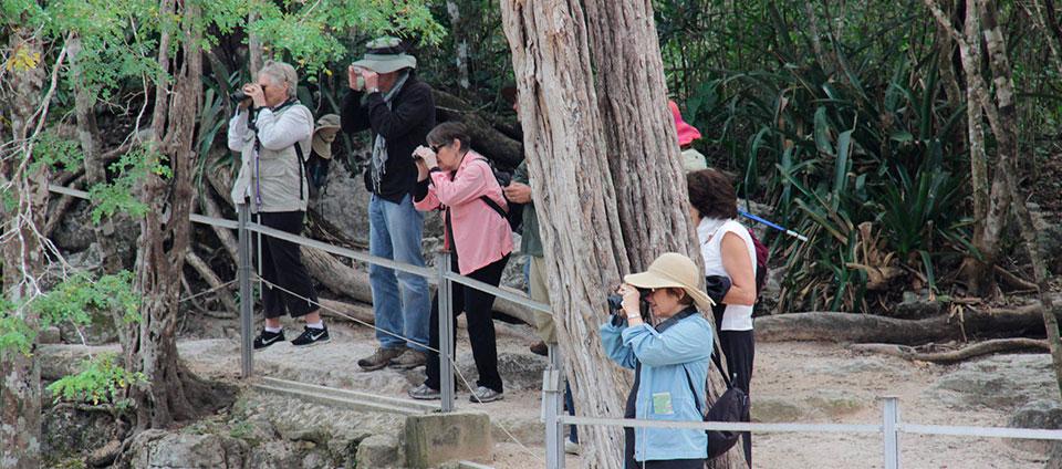 YUCATAN BIRDING JOURNEY Flamingos, Wrens, and More in Yucatan State January 12-18, 2017